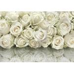 Белые розы #2
