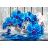 Синие орхидеи #2
