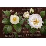 Белые розы #5