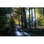 Валонский лес #1